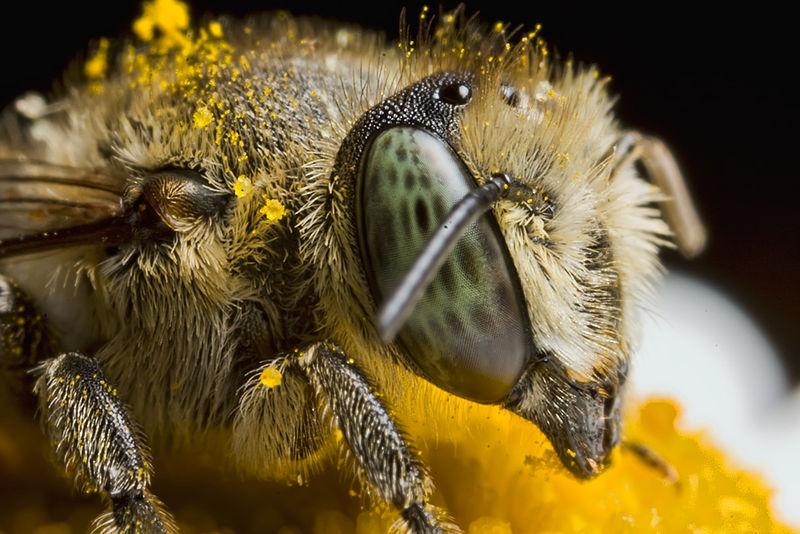 The Pollinator Commeth!