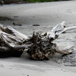 The beach by our hotel in Montezuma had some AWESOME driftwood.