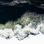 An algal bloom appears off the Princess Astrid Coast in East Antarctica.