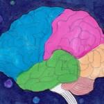 CM_brain