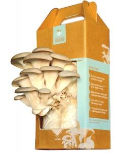 Mushroom-Kit-2