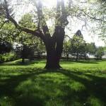 Frazer_Park_(Portland,_Oregon)