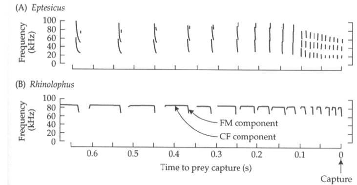 FM and CF calls from two species of bats. Some species have FM and CF components within one call. Pretty sweet.