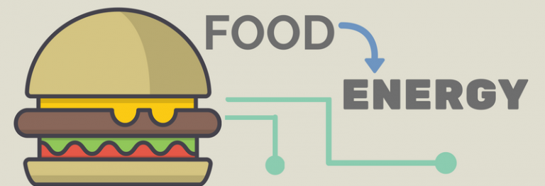 How does food become energy?