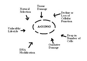 Aging_Factors